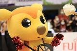 2021/1/27 対熊本ヴォルターズ戦 シカッチェ - 2