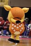 2021/10/24 対熊本ヴォルターズ戦 シカッチェ - 4